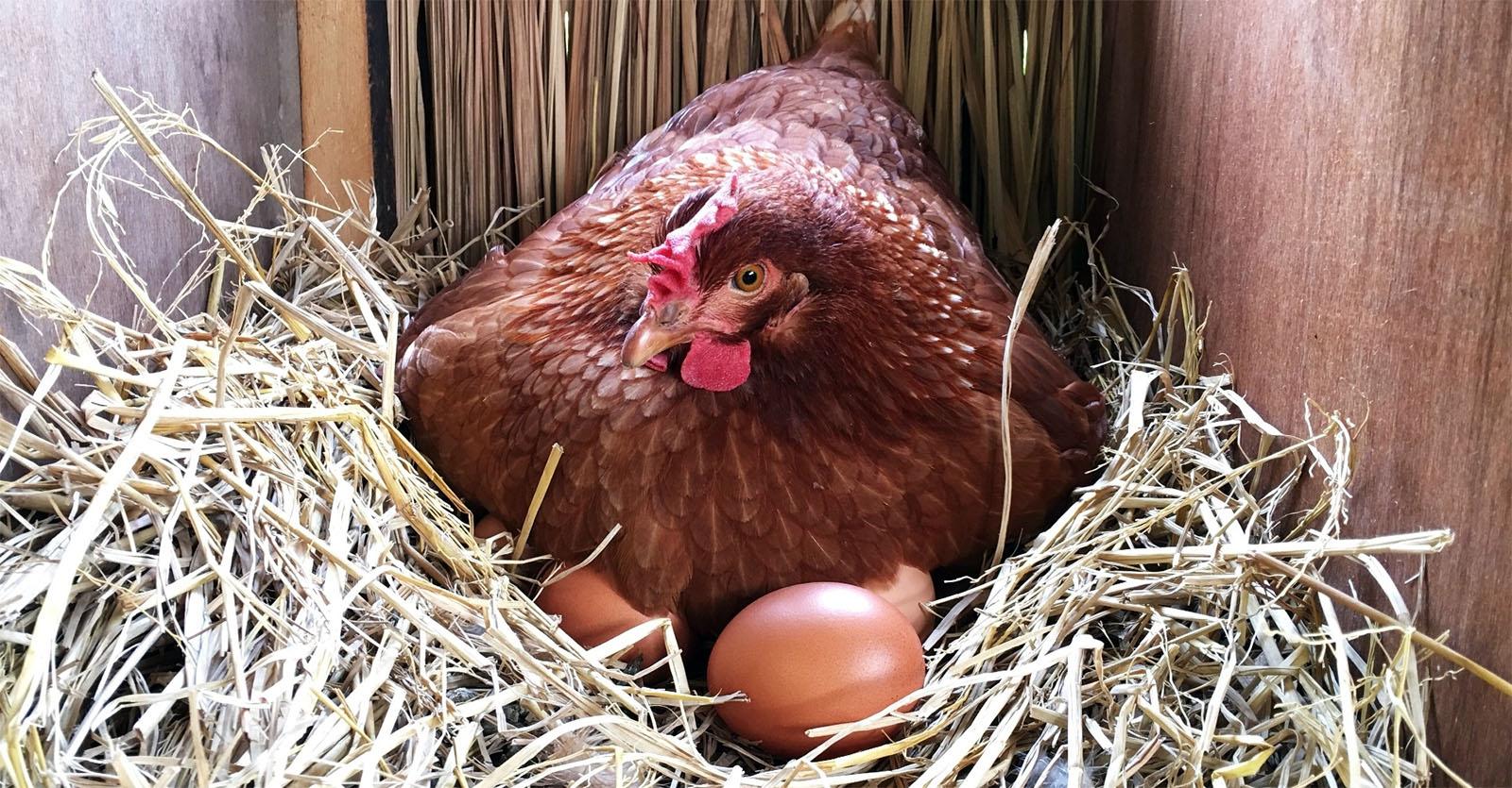 Гнездование