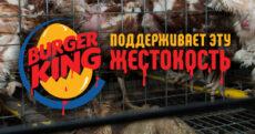 Глобальная кампания против Burger King